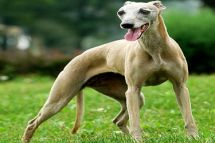 We need to inform you that that greyhound dogs moves from Europe to Fareast for commercial purposes are prohibited with immediate effect.